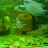 Vand pesti exotici - Specii pesti
