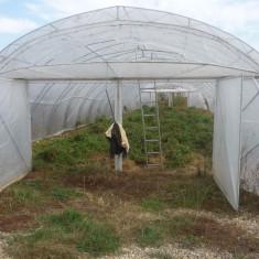 Sera - Vand solar legume 8X30m, arce zincate noi, tip ferma pentru 2 randuri de folii, teava 0, 5 toli galvanizata.