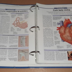 Enciclopedia Medicala - Fiziologie