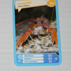 CARTONASE MEGA IMAGE - COMORILE OCEANELOR NR 53 - Cartonas de colectie
