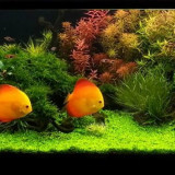 Intretineri si amenajari acvarii