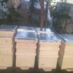 Apicultura - Stupi de albine