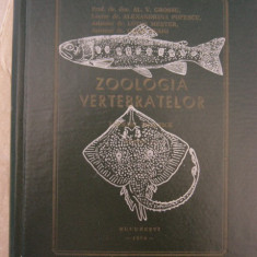 CC43 - ZOOLOGIA VERTEBRATELOR - 1974 - Curs Medicina