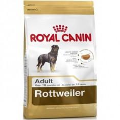 Royal Canin Rottweiler Adult 12 Kg Livrare Gratuita - Mancare caini, Uscata